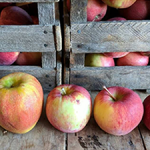 Image of apples and crate - Tammy's Tastings Home Page